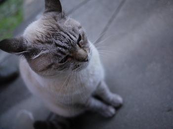 まーちんのブログ-ネコ