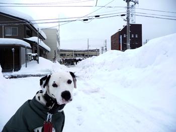 まーちんのブログ-2