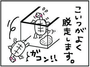 かめ+2_convert_20111230174630