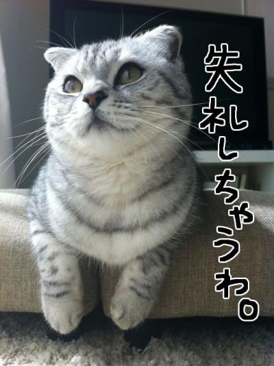 しつれい_convert_20111231193723