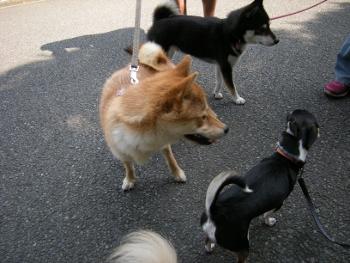 動物愛護フェス-3