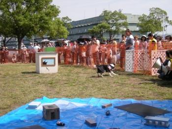 動物愛護フェス-5