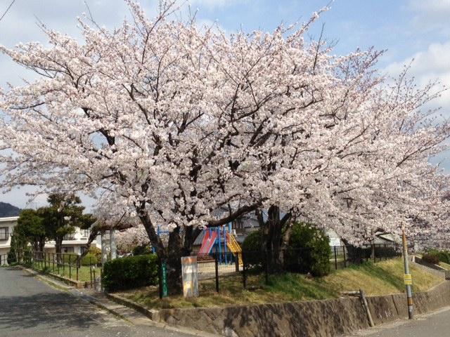 西公園sakura
