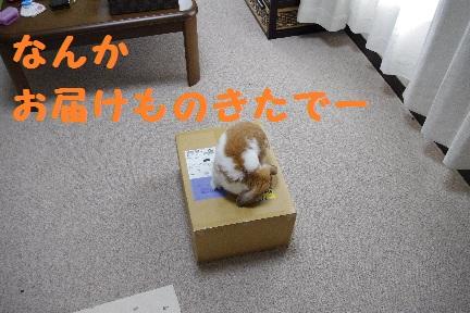 1_20110820150255.jpg