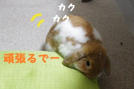 1_20110822012850.jpg