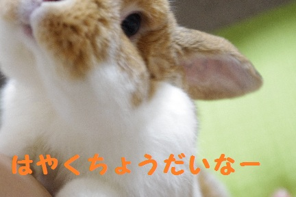 1_20110825003337.jpg