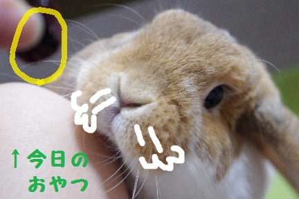 1_20110825003338.jpg