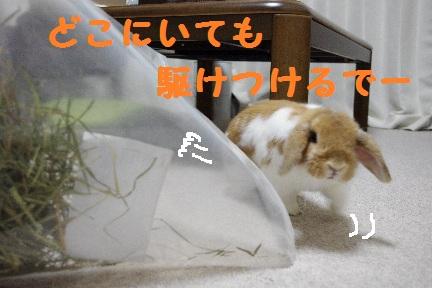 2_20110823020407.jpg