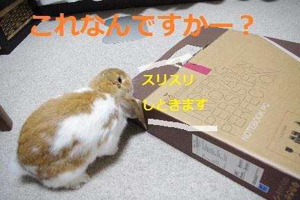 2_20110828230237.jpg