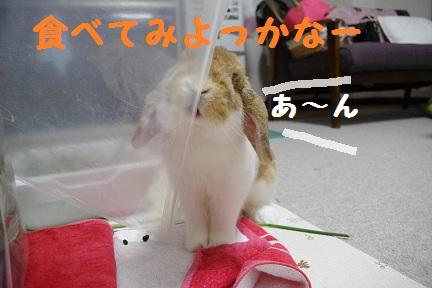 3_20110823020407.jpg