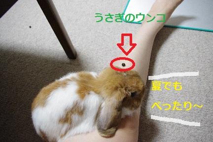 3_20110830002337.jpg