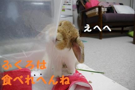 4_20110823020407.jpg