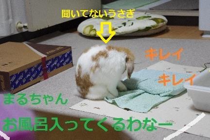 4_20110831224750.jpg