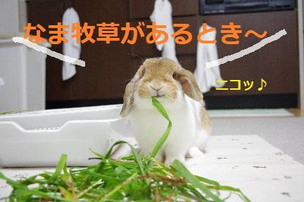 6_20110831022117.jpg
