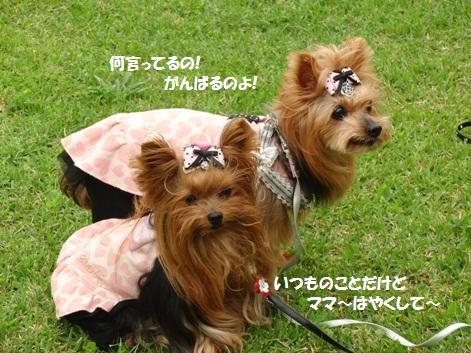 2011102410_20111025202501.jpg