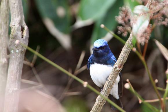 青い鳥10