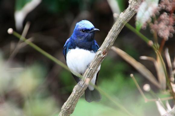 青い鳥12