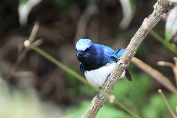 青い鳥13