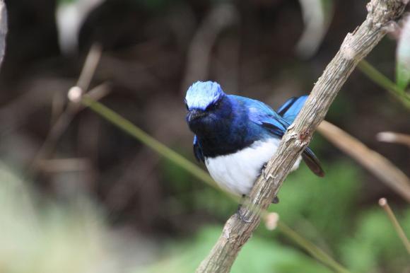 青い鳥14