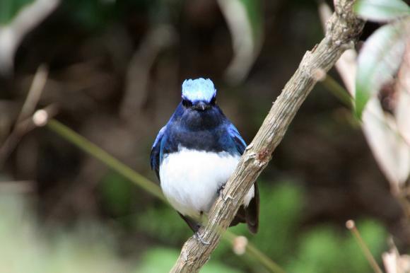 青い鳥15