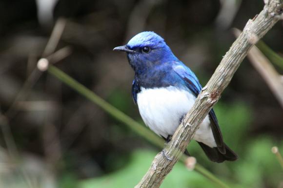 青い鳥17