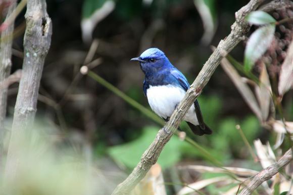 青い鳥18