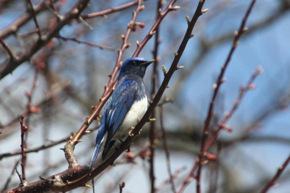 青い鳥20