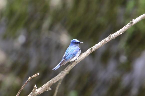青い鳥21