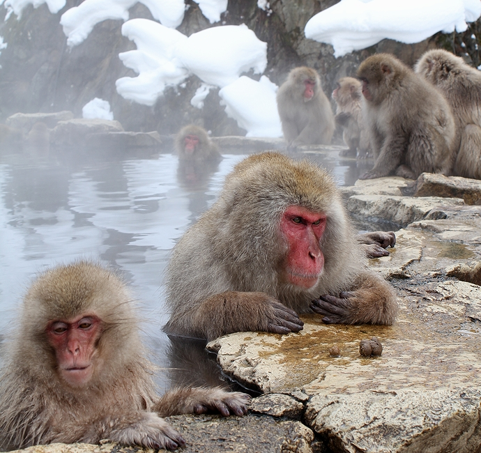 地獄谷温泉 サルの露天風呂