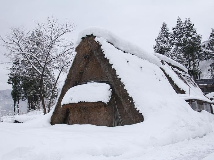 相倉の原始合掌造りと雪