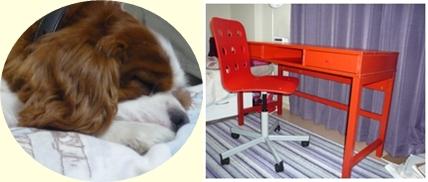 IKEA家具とpocoの寝顔-horz