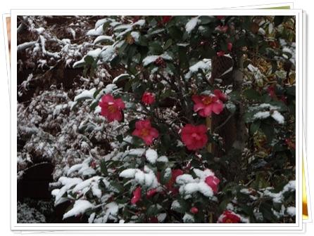 240219雪景色1