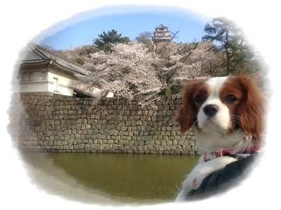 250403丸亀城1(poco)