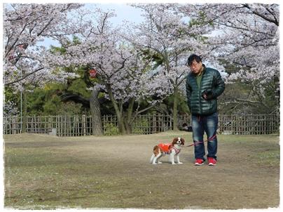 250403丸亀城6(pocoとpocopapa)