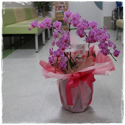 2506156周年記念の花3