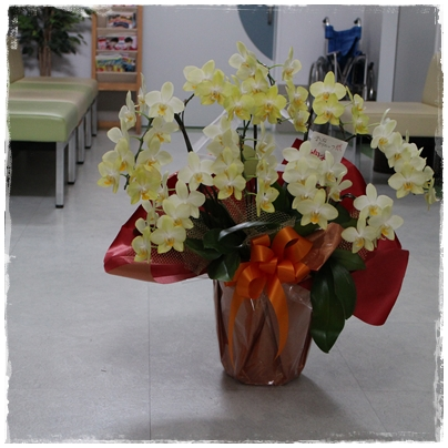 2506156周年記念の花8