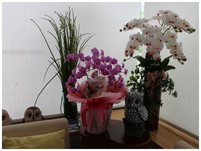 2506156周年記念の花4
