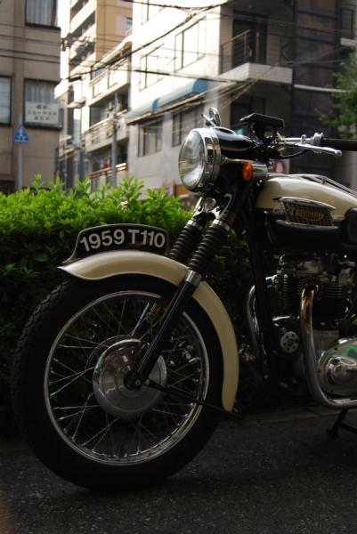 Tiger110
