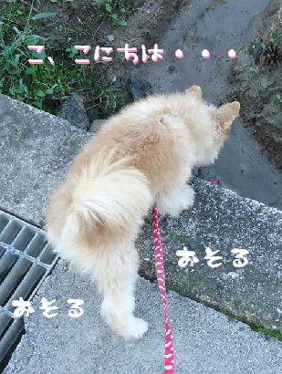 びびり犬again