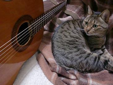 みるギター1