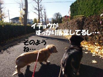 写真981(№250)1