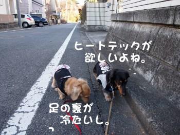 写真1007(№252)1