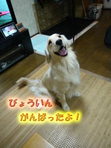 20120425-2_20120424223444.jpg