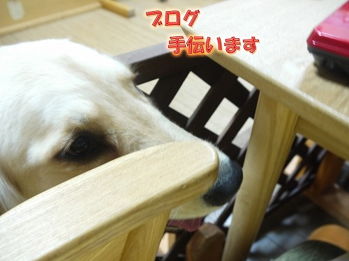 20120502-3.jpg