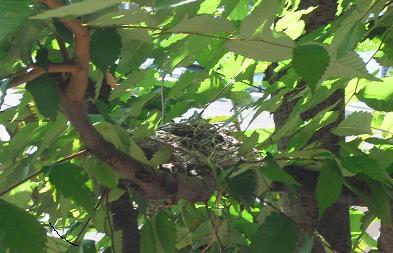 4 ひよどりの巣