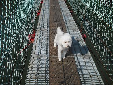 4 吊橋を渡る
