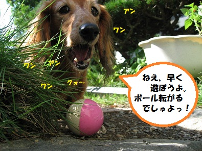 IMG_4165.jpg