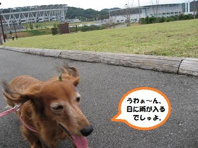 IMG_4596.jpg