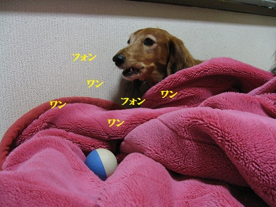 IMG_4752.jpg