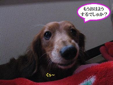 IMG_5014.jpg